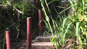 mcallen botanical gardens
