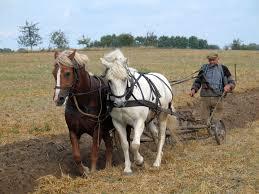 Фермер — Википедия