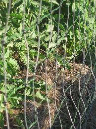A Treatise On Electric Fences For Poultry Backyard Chickens Learn How To Raise Chickens