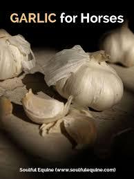 garlic for horses a natural repellent