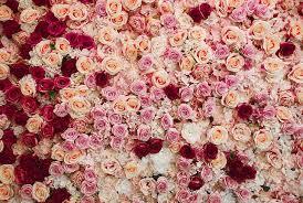 flowers rose pink flower