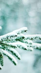 nature winter tree mobile wallpaper