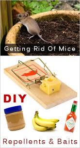 mice ne homemade repellents baits