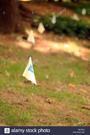 Flags Marking The Line Of An Invisible Dog Fence In A Rural Garden Stock Photo Alamy
