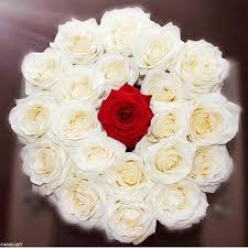 صور زهور وباقات ورد جميلة أجمل ورود الحب فهرس