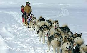 Dog sled tour just a short drive away in Pagosa Springs, Colo ...