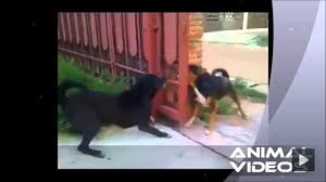 Dogs Bark Through The Open Gate Funnydogs Dog Barking Dogs Funny Animals