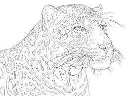 Portrait Of Indian Leopard Coloring Pages Colouring Adult Detailed