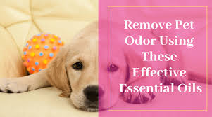 remove pet odor using these effective