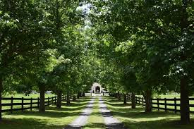 2 233 Mansion Driveway Photos Free Royalty Free Stock Photos From Dreamstime