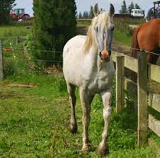 Does Electric Fencing Cause Stress In Your Horse Horsetalk Co Nz
