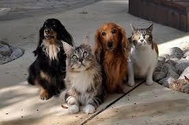 Congresso se mobiliza para proteção dos animais — Senado Notícias