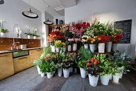 store-narcissus-flower-shop-uk-103112.jpg - Botanical Brouhaha