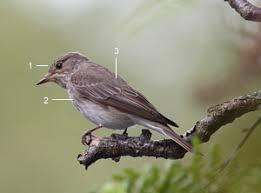 Identifier les oiseaux des jardins et des parcs au printemps et en ...