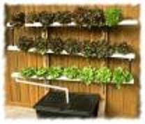 build a homemade hydroponics system