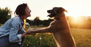 Aetertek New Zealand Dog Training Collars And Dog Shock Collars