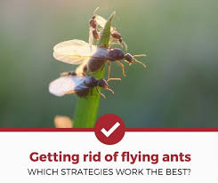 11+ Do Male Ants Have Wings Pictures