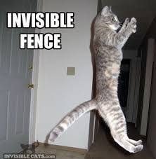 Pin By Nicholas King On Katzen Funny Animals Funny Cats Invisible Fence