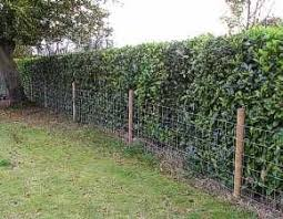 Brett Gates Garden Hedges Farm Fence Dog Proof Fence