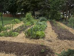 tips for growing in unframed raised beds
