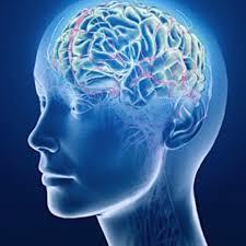 Le cerveau et l'espace | Coursera