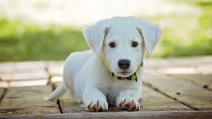 cute puppy wallpapers 40 images
