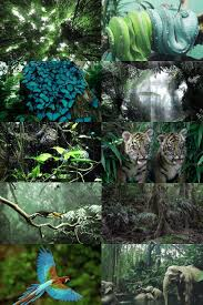 Pin by Wendi Henderson on Dschungel Moods   Color collage, Aesthetic  collage, Tropical rainforest