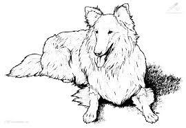 1001 Kleurplaten Dieren Hond Kleurplaat Hond