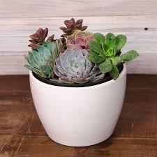 succulent garden gift at