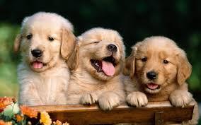 dog desktop wallpapers top free dog