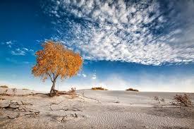nature photography landscape dune
