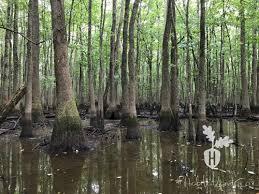 Arkansas Swamp Land for Sale, Swamp Property for Sale : LANDFLIP