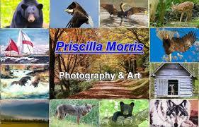 Priscilla Morris