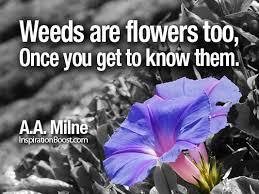weeds are flowers too once you get to know them inspiration boost