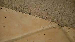 31+ Termite Holes In Floor Pics