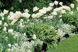 a white border idea for your spring garden