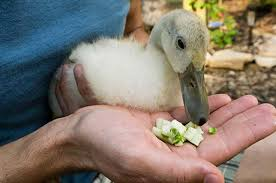 How To Get Rid Of Geese Top 10 Repellents