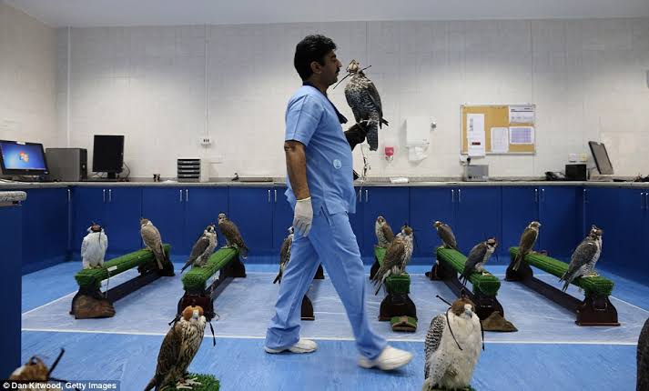 Image result for world's largest falcon medical centre""