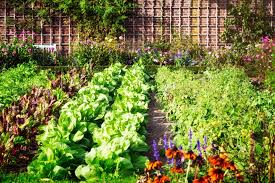 companion planting guide layout tips