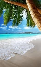 شاطئ الاستوائية خلفيات حية For Android Apk Download