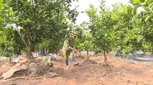 Những hành vi bị nghiêm cấm trong trồng trọt