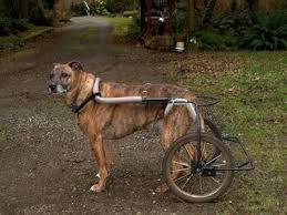diy dog wheelchair homemade dog