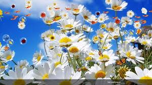 free flowers live wallpaper
