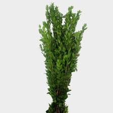 Myrtle Greens - Wholesale - Blooms By The Box
