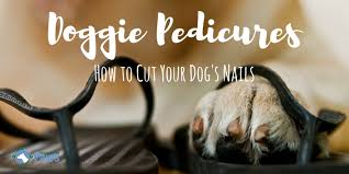 how to cut a dog s nails how short