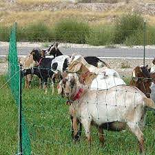 Electric Fence Netting Goats I M Going To Try This For The Dog Enclosure Should Keep Them In And Away From Digging An Electric Fence Dog Enclosures Goats