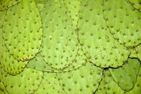 nopales cactus nutrition facts and
