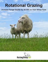 Sheep Fencing Sheep Fence Options Cost