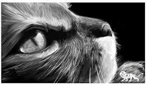 Mas allá de la mirada de un felino ya hace la libertad por ...
