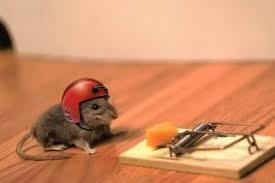 mouse traps simple diy no kill traps